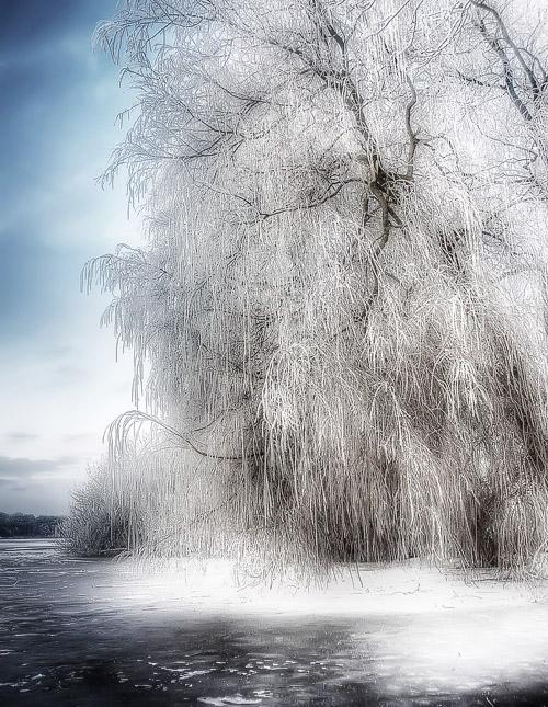 hdr-bild-baum-bei-frost