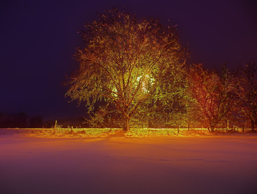 hdr-photography-plants-nature-landscapes-tree-at-night