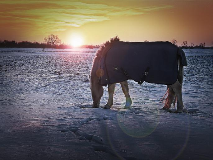 hdr-bild-pferd-bei-sonnenuntergang