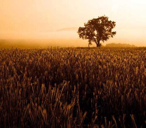 04. Surreales Naturfoto | Daybreak