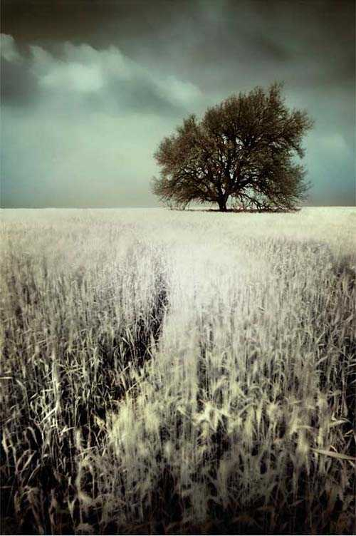 08. Surreales Naturfoto | In Fields Of White