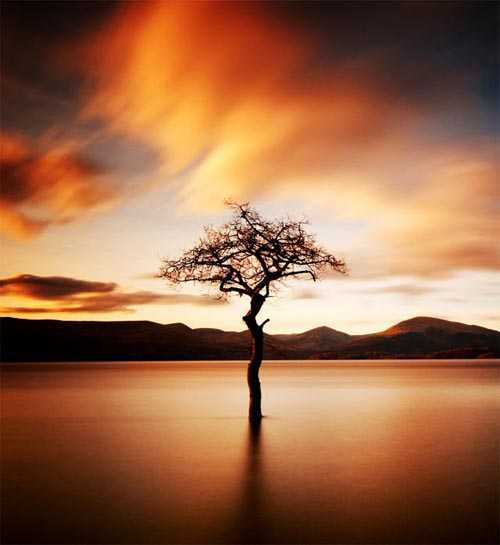 "13. Surreales Naturfoto | ""That tree"" at Milarrochy, Loch Lomond"