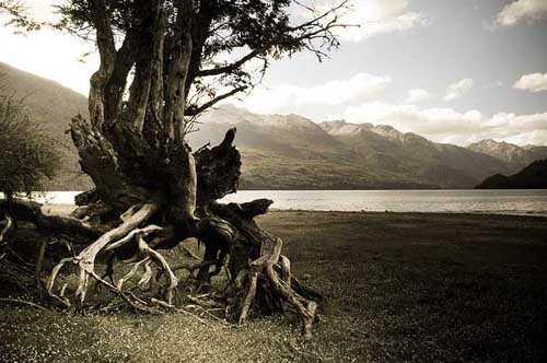 17. Surreales Naturfoto | Entrelazado
