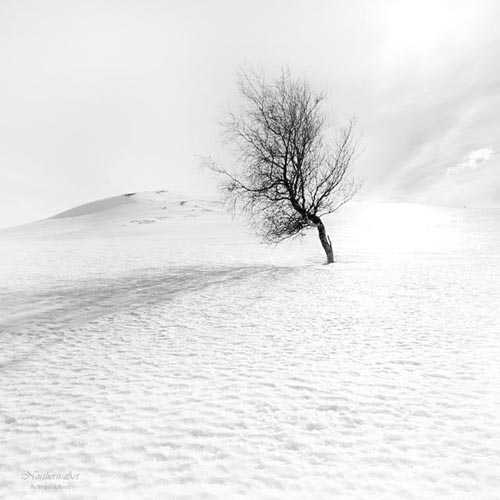 18. Surreales Naturfoto | Uno