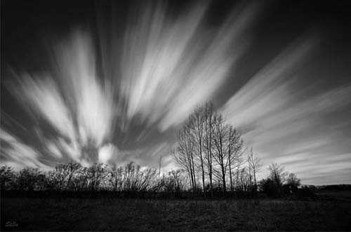 43. Surreale Natur-Fotos | Strips BW