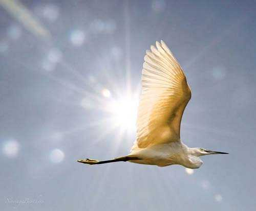 50. Surreale Natur-Fotos | The Egret And The Sun