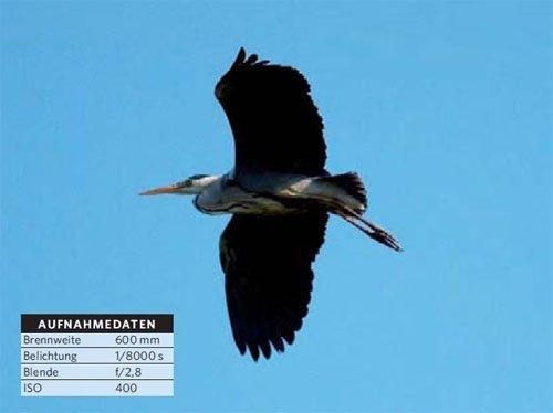 Fliegende Vögel fotografieren