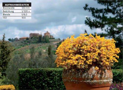 Perfekt fotografieren: Blumentopf - dunstiger Hintergrund