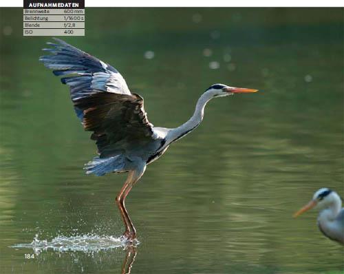 Vogelfotografie: nur mit langer Brennweite