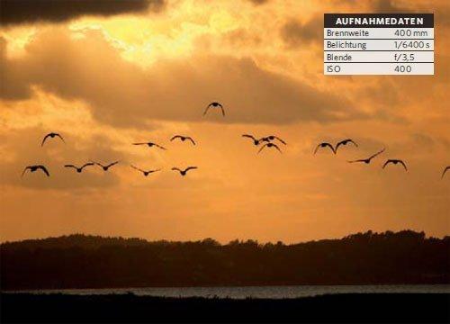 Vogelschwärme vor Sonnenuntergang