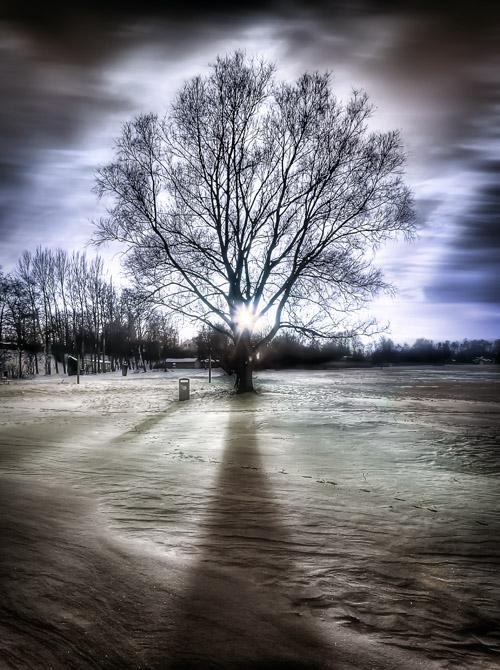 Baum bei Sonnenuntergang - Surreale Landschaftsfotografie