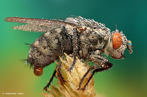 Makrofotografie von Insekten Upss!!