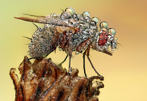 Makrofotografie von Insekten o0\/0