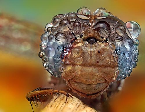 Makrofotografie von Insekten OOooOOooOo