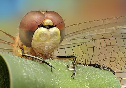 Makrofotografie von Insekten: Scary