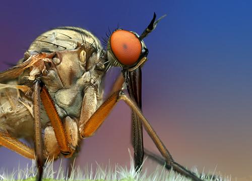 Makrofotografie von Insekten: Big