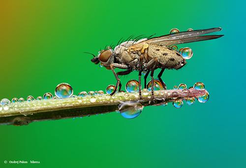 Makrofotografie von Insekten: Untitled