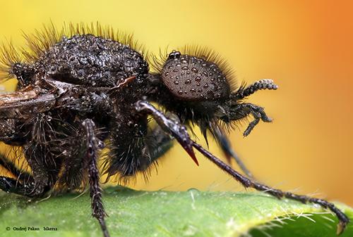 Makrofotografie von Insekten: Hair