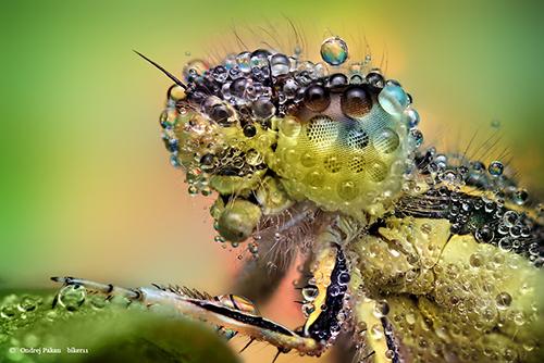 Makrofotografie von Insekten OooooooOOoo
