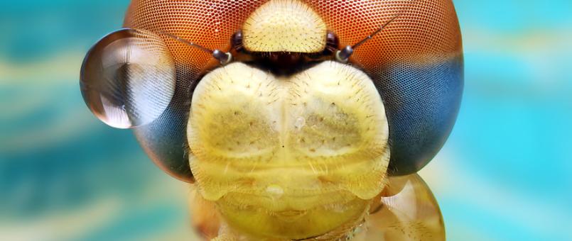 40+ faszinierende Makrofotografien aus der Welt der Insekten