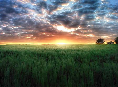Weizenfeld bei Sonnenuntergang